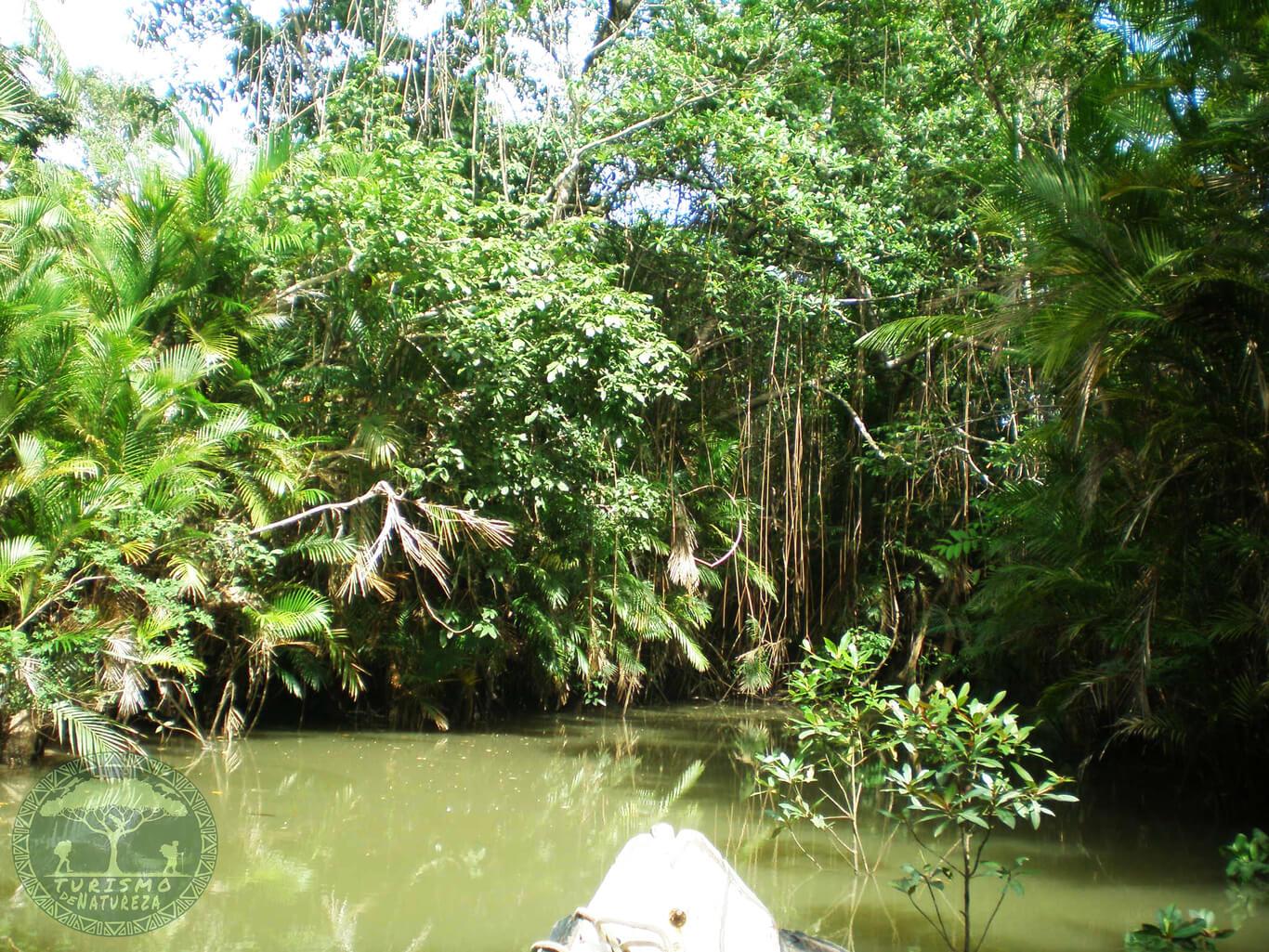 O que fazer na Ilha de Marajó em Soure. Passeio de barco pelo Furo do Miguelão.
