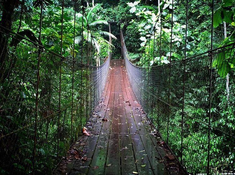 PETAR: Ponte sobre a trilha do Betari.