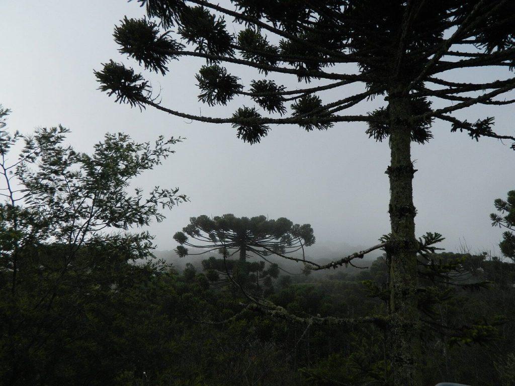 Biomas Brasileiros: Pampas.
